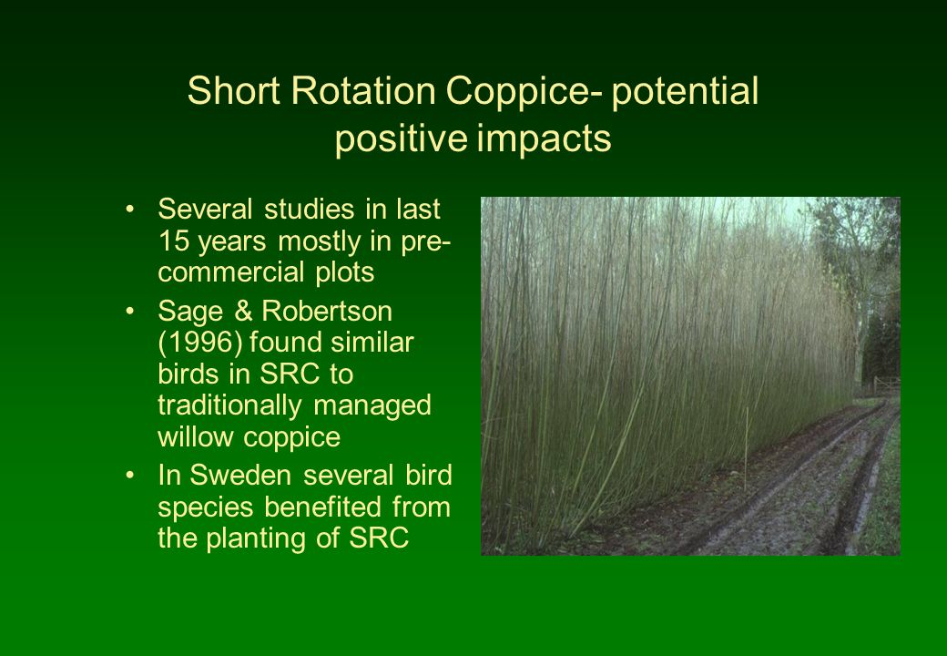 Short Rotation Coppice- potential positive impacts Several studies in last 15 years mostly in pre- commercial plots Sage & Robertson (1996) found similar birds in SRC to traditionally managed willow coppice In Sweden several bird species benefited from the planting of SRC