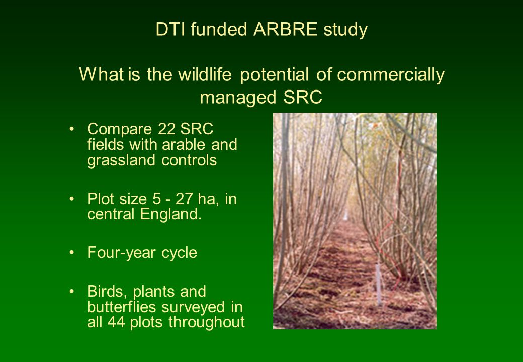 DTI funded ARBRE study What is the wildlife potential of commercially managed SRC Compare 22 SRC fields with arable and grassland controls Plot size 5