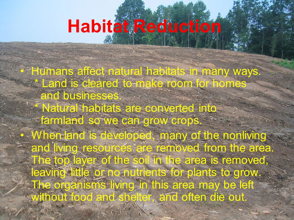 Habitat Reduction Humans affect natural habitats in many ways. * Land is cleared to make room for homes and businesses. * Natural habitats are convert