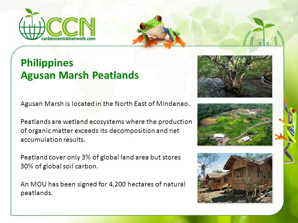 Philippines Agusan Marsh Peatlands Agusan Marsh is located in the North East of Mindanao. Peatlands are wetland ecosystems where the production of org