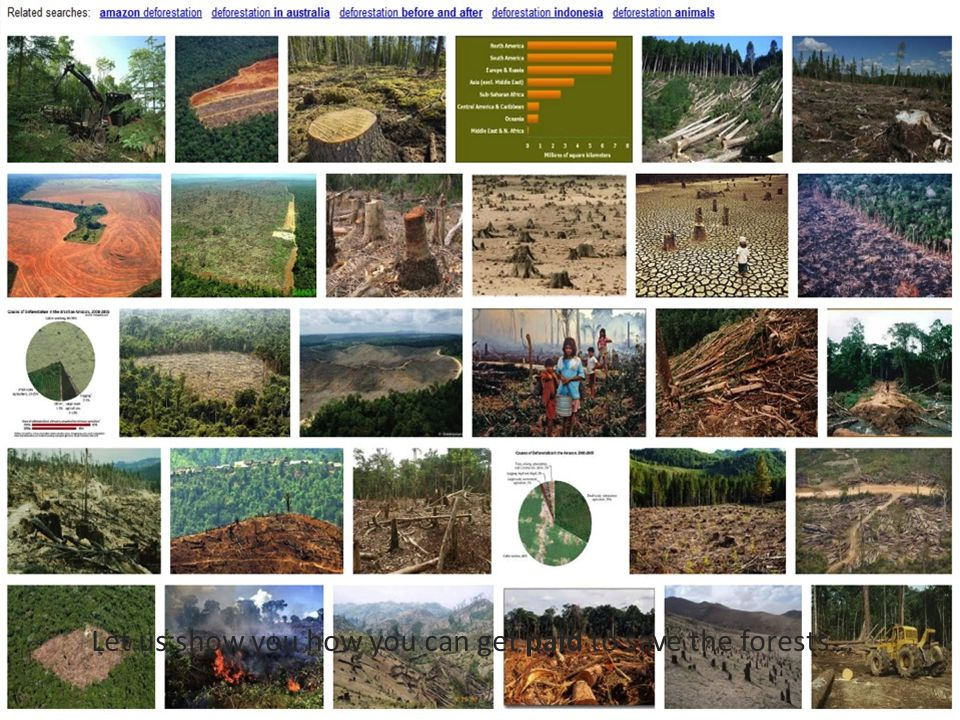 Millions of Hectares Destroyed Everyday Just Google deforestation and you will be shocked. Let us show you how you can get paid to save the forests...