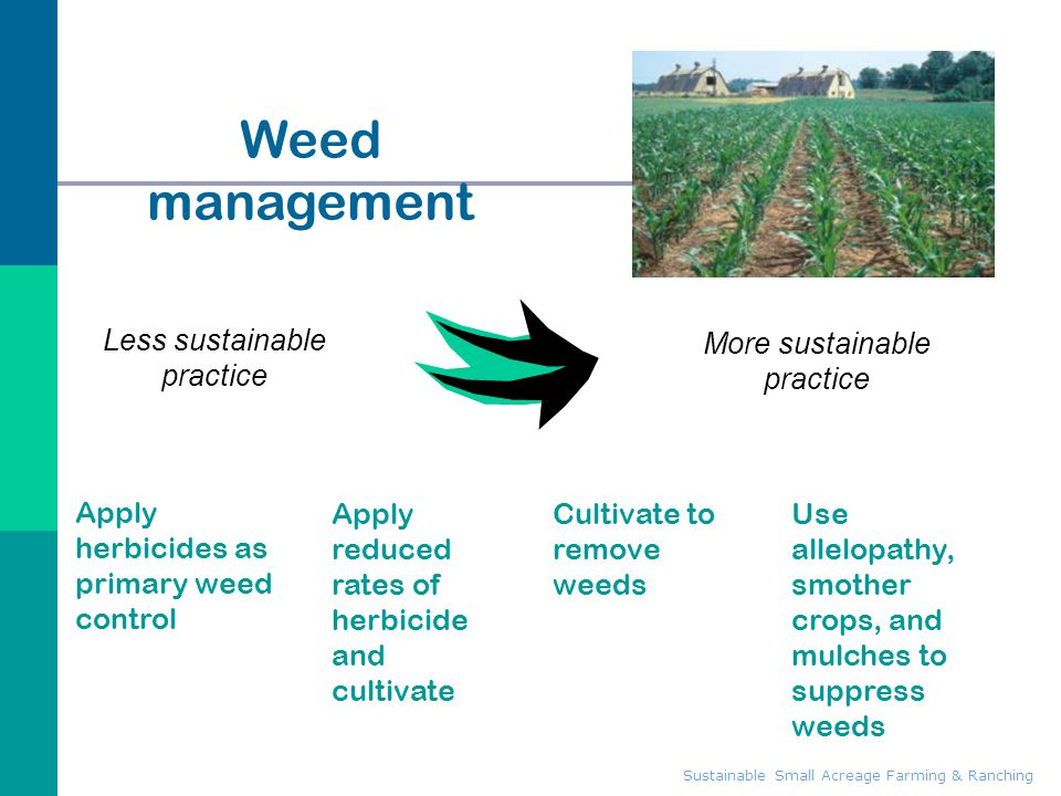 Sustainable Small Acreage Farming & Ranching Weed management Apply herbicides as primary weed control Use allelopathy, smother crops, and mulches to s