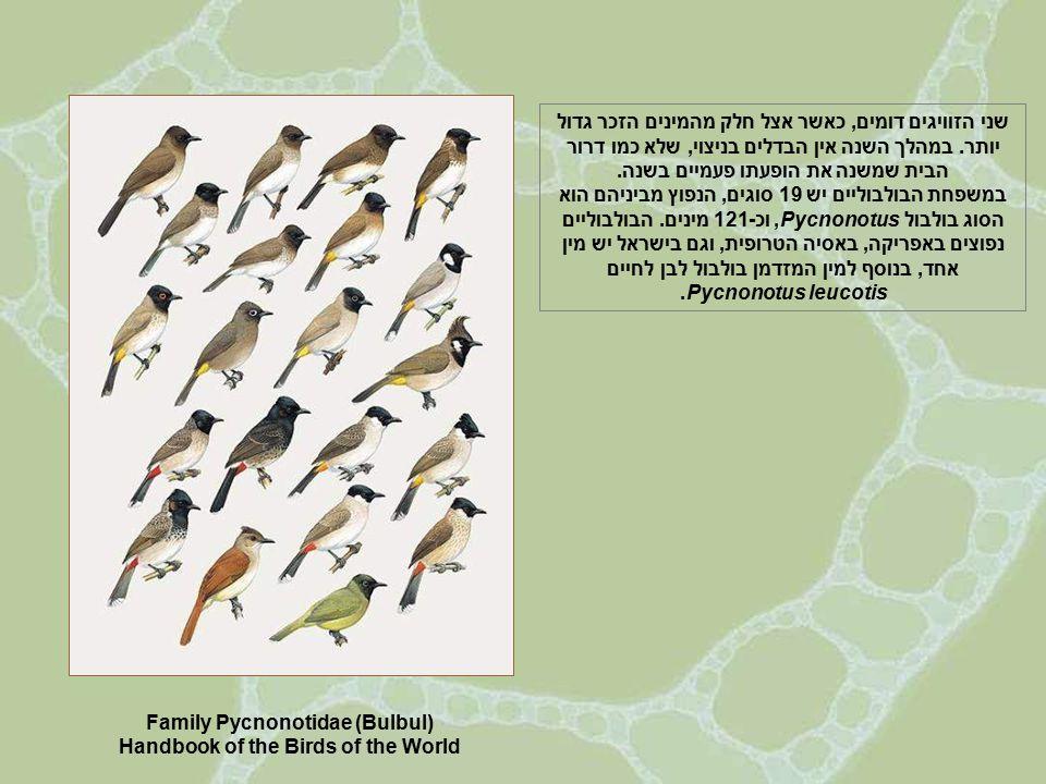 מקורות: http://ibc.lynxeds.com/ http://ibc.lynxeds.com/search/ibc_features http://en.wikipedia.org/wiki/Pycnonotus http://ibc.lynxeds.com/search/ibc_features http://www.warwicktarboton.co.za/Bird לשמיעת קולות הבולבולים (וקולות כל מיני הציפורים): http://www.xeno-canto.org/browse.php?query Mystery of the Missing Baby Bulbuls – מינים שונים של הבולבולים של בורנאו וקולותיהן: http://www.borneobirdimages.com/family קלריטה ואפרים הנכם מוזמנים להיכנס לאתר שלנו: www.clarita-efraim.com chefetze@netvision/net.il