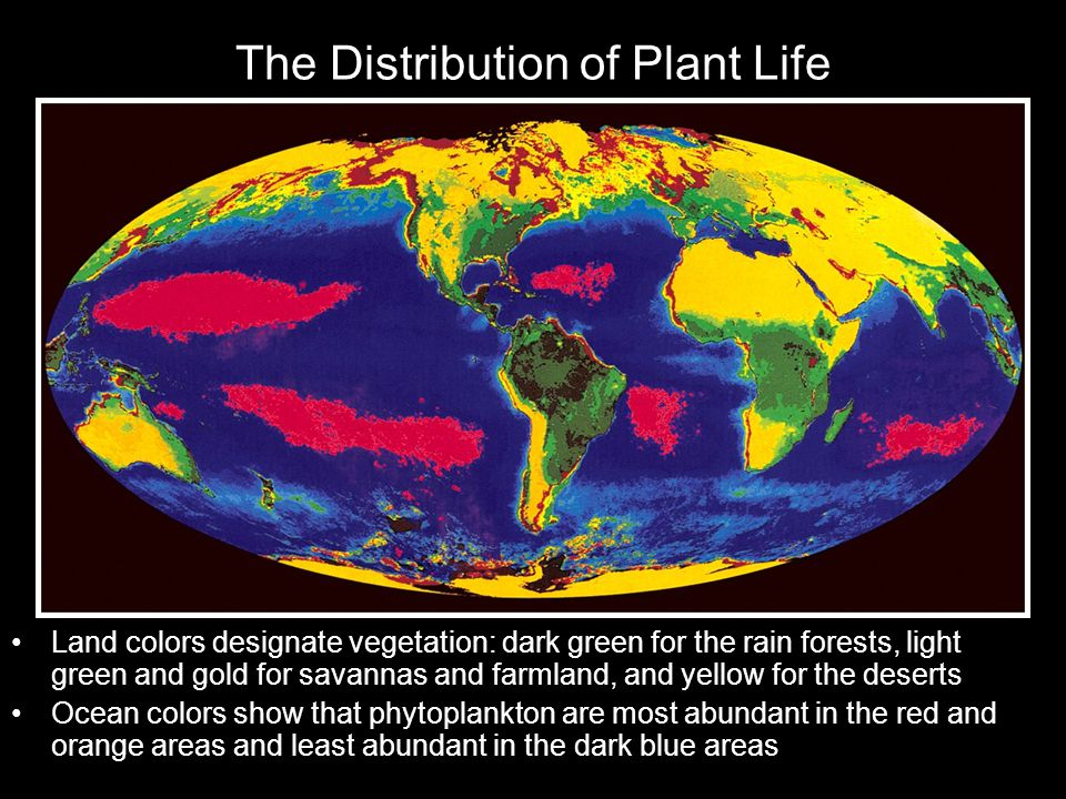 The Distribution of Plant Life Land colors designate vegetation: dark green for the rain forests, light green and gold for savannas and farmland, and yellow for the deserts Ocean colors show that phytoplankton are most abundant in the red and orange areas and least abundant in the dark blue areas