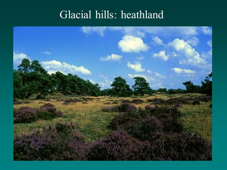 Glacial hills: heathland