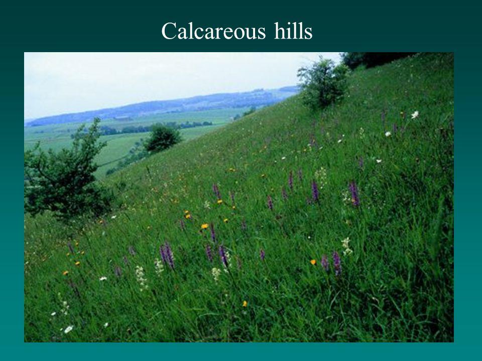 Calcareous hills
