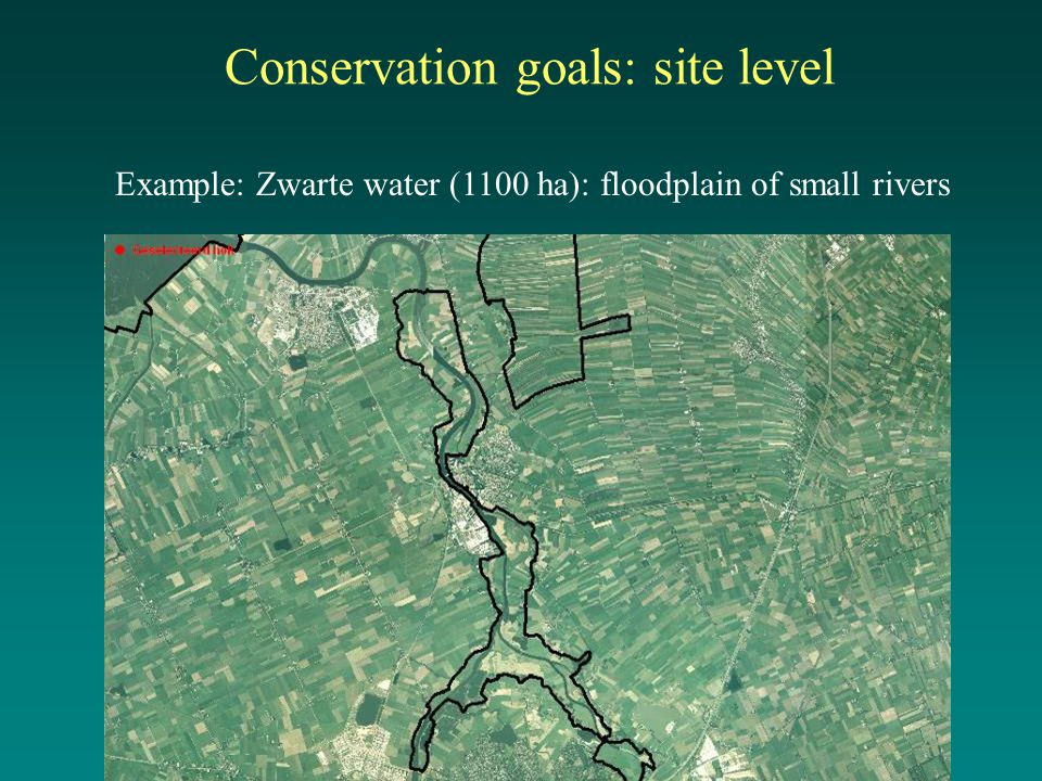 Conservation goals: site level Example: Zwarte water (1100 ha): floodplain of small rivers