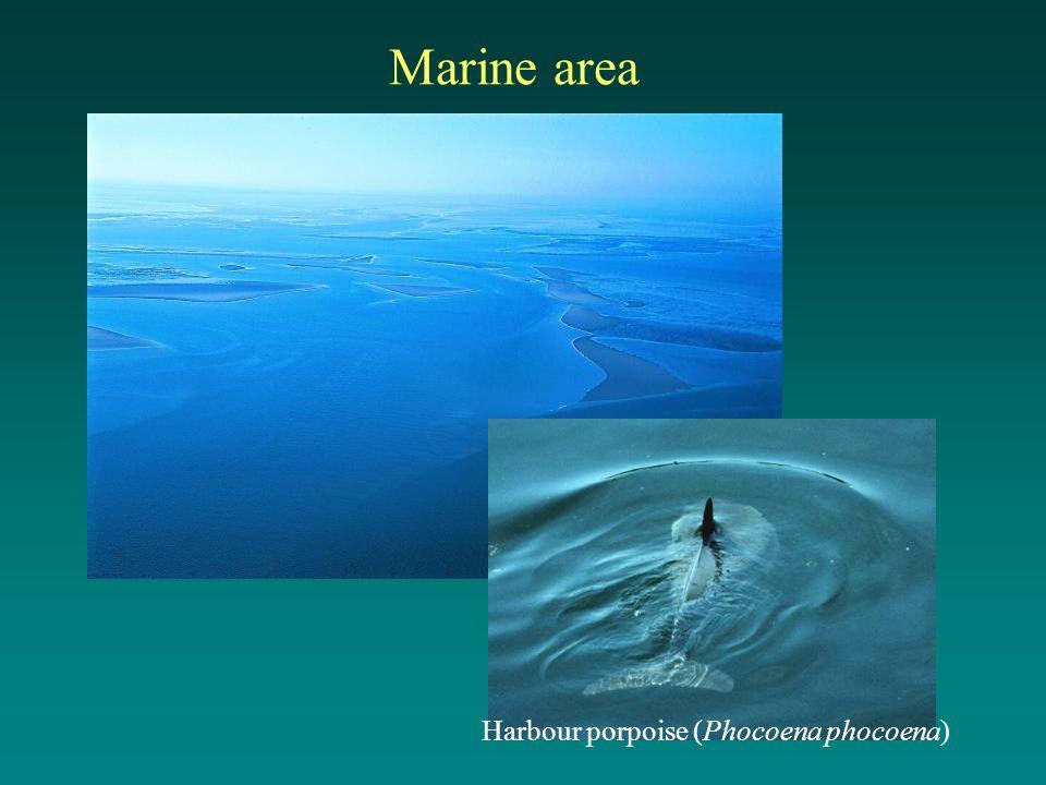 Marine area Harbour porpoise (Phocoena phocoena)