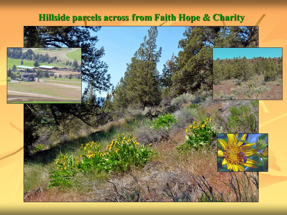 Hillside parcels across from Faith Hope & Charity