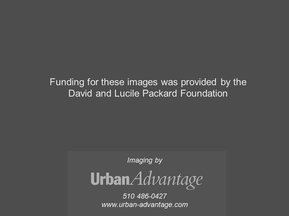 510 486-0427 www.urban-advantage.com Imaging by Funding for these images was provided by the David and Lucile Packard Foundation
