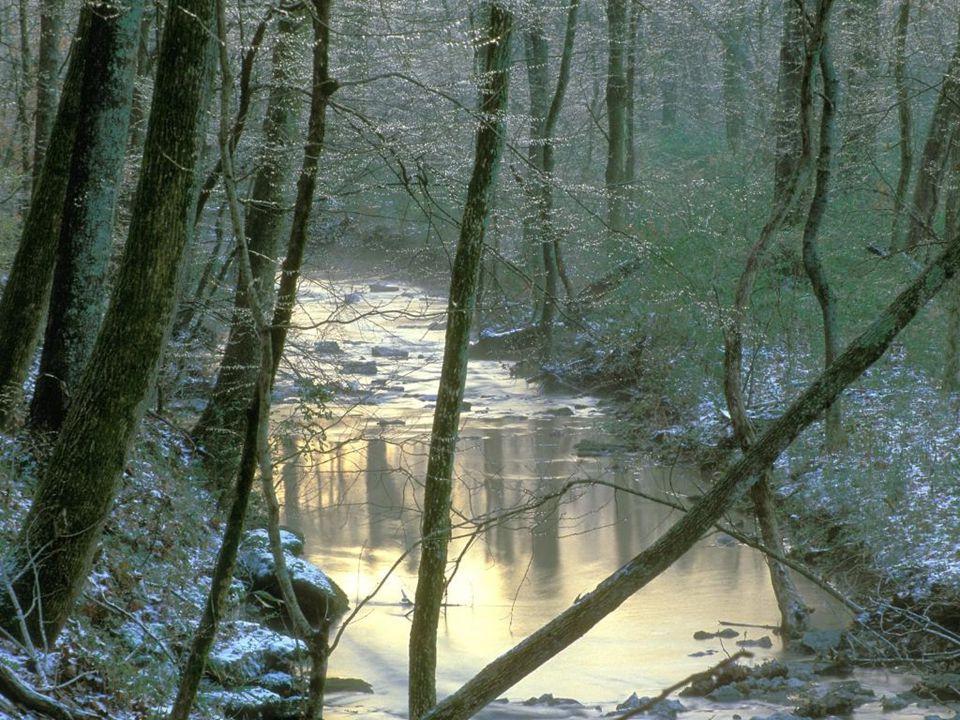 Vaughn s Creek, Edwin Warner Park, Nashville, Tennessee Vaughn s Creek, Edwin Warner Park, Nashville, Tennessee