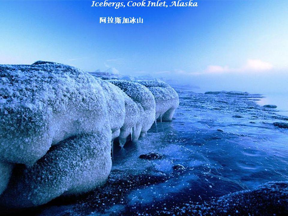 Icebergs, Cook Inlet, Alaska 阿拉斯加冰山