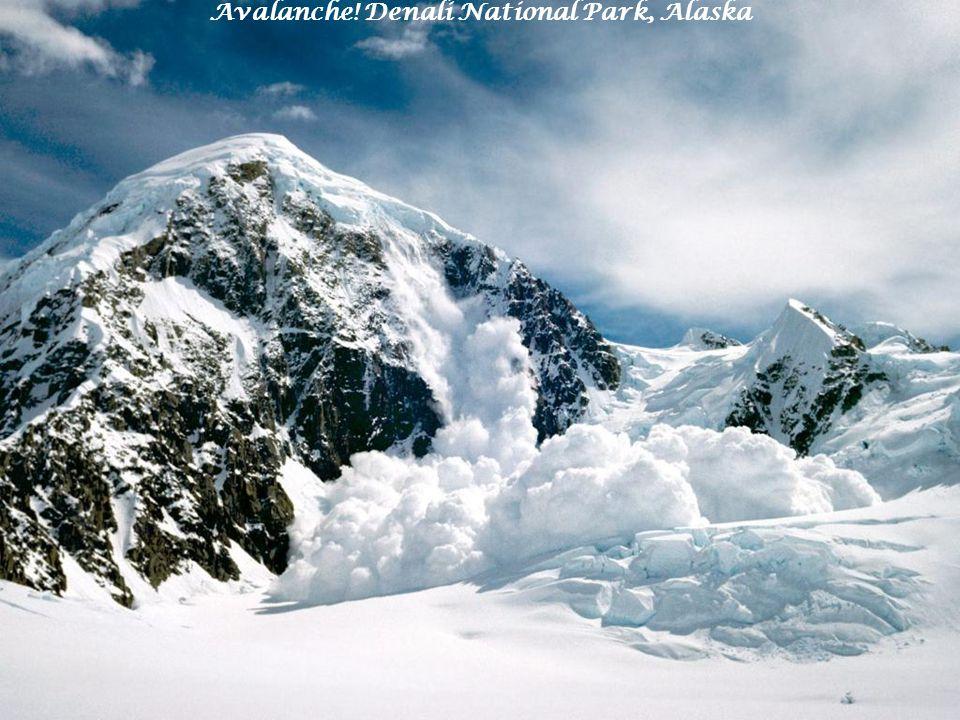 Avalanche! Denali National Park, Alaska