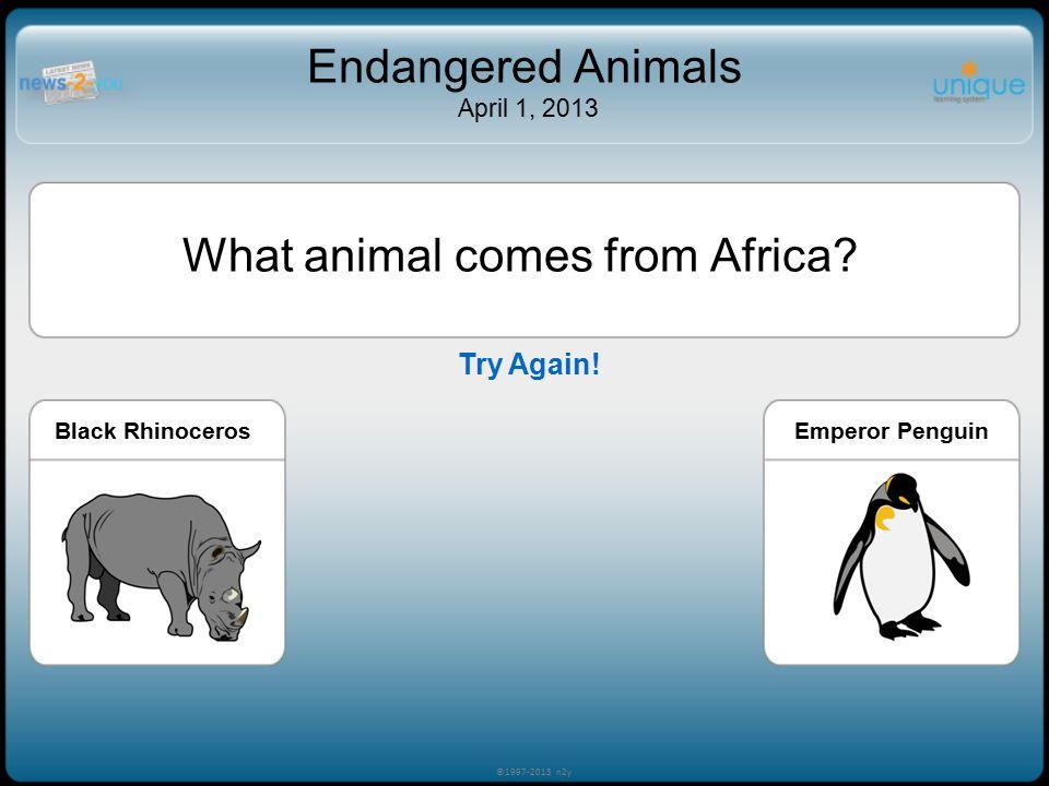 What animal comes from Africa? Black RhinocerosPolar BearEmperor Penguin ©1997-2013 n2y Endangered Animals April 1, 2013