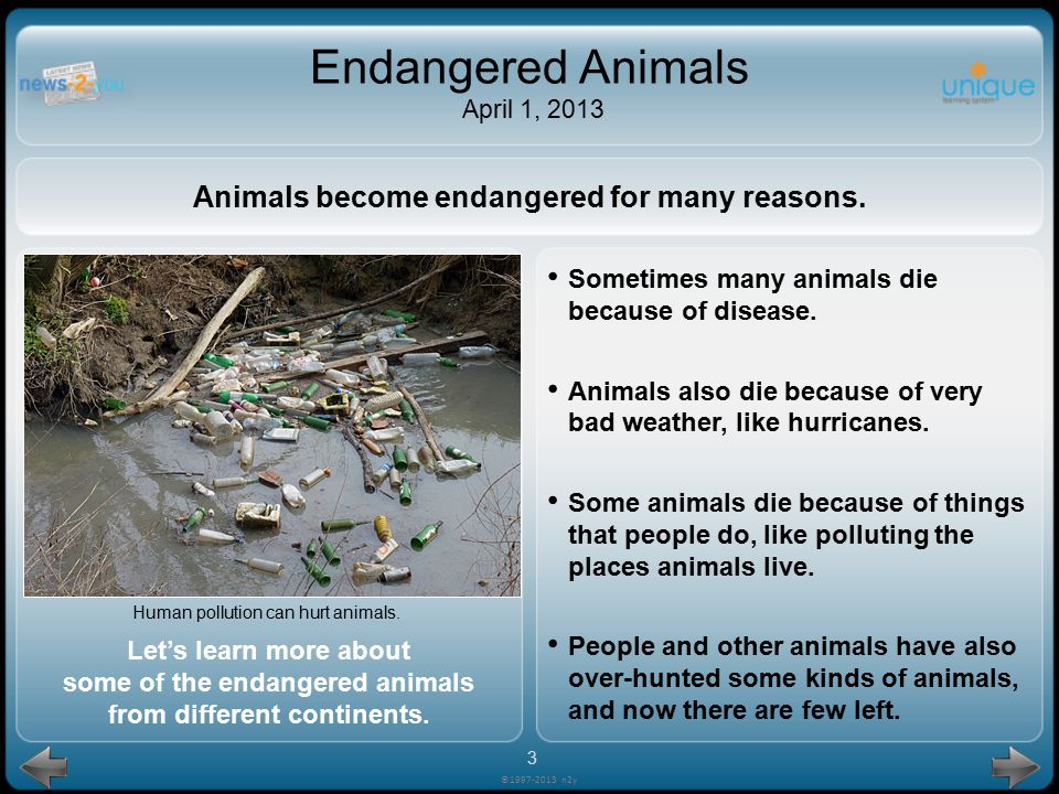 Sometimes many animals die because of disease.