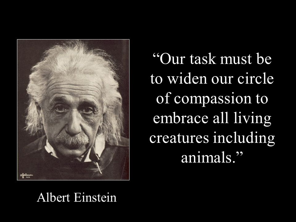 Our task must be to widen our circle of compassion to embrace all living creatures including animals. Albert Einstein