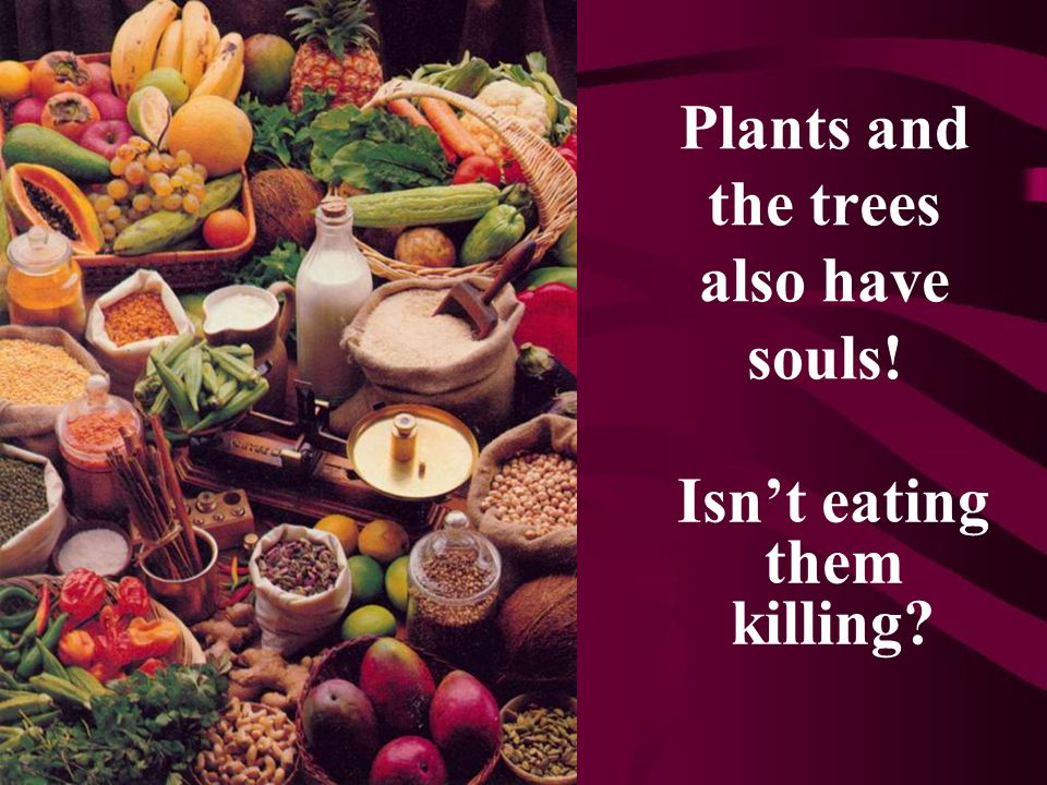 Plants and the trees also have souls! Isn't eating them killing