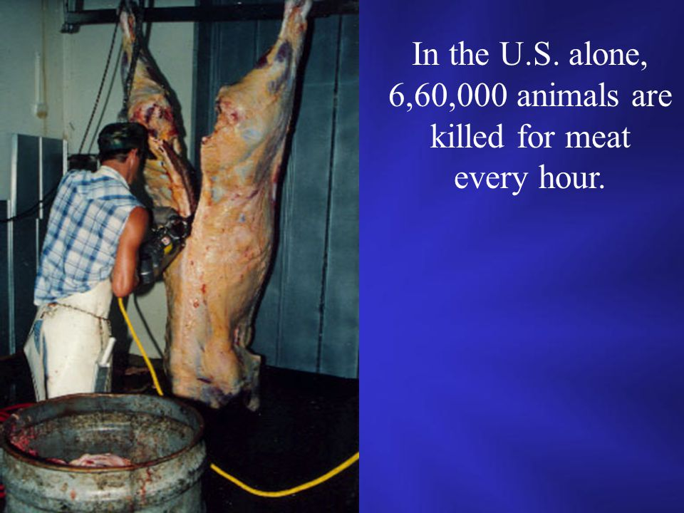 In the U.S. alone, 6,60,000 animals are killed for meat every hour.
