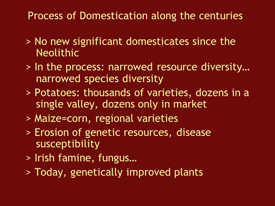 Process of Domestication along the centuries > No new significant domesticates since the Neolithic > In the process: narrowed resource diversity… narrowed species diversity > Potatoes: thousands of varieties, dozens in a single valley, dozens only in market > Maize=corn, regional varieties > Erosion of genetic resources, disease susceptibility > Irish famine, fungus… > Today, genetically improved plants