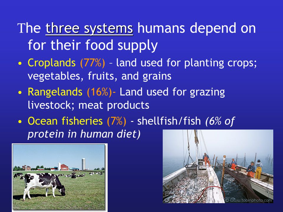 three systems T he three systems humans depend on for their food supply Croplands (77%) – land used for planting crops; vegetables, fruits, and grains Rangelands (16%)- Land used for grazing livestock; meat products Ocean fisheries (7%) - shellfish/fish (6% of protein in human diet)