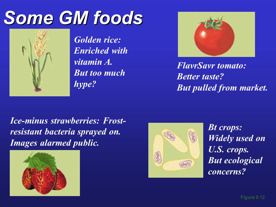 Some GM foods Figure 9.12 Golden rice: Enriched with vitamin A.