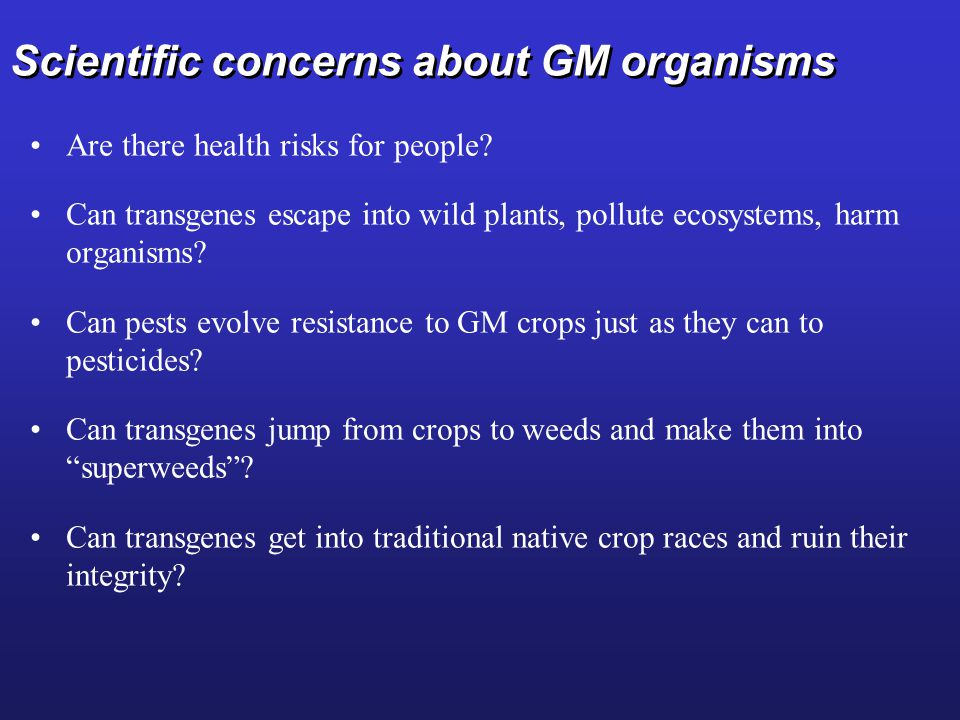 Scientific concerns about GM organisms Are there health risks for people.