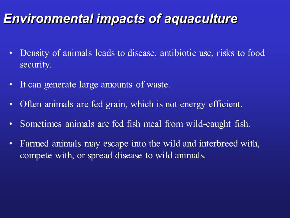 Environmental impacts of aquaculture Density of animals leads to disease, antibiotic use, risks to food security.