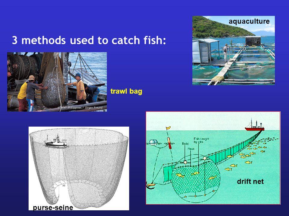 purse-seine drift net aquaculture trawl bag 3 methods used to catch fish: