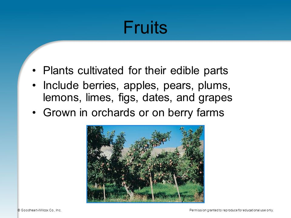 Permission granted to reproduce for educational use only. © Goodheart-Willcox Co., Inc. Fruits Plants cultivated for their edible parts Include berrie