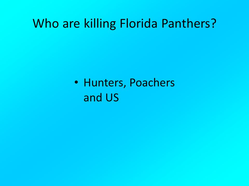 Who are killing Florida Panthers? Hunters, Poachers and US