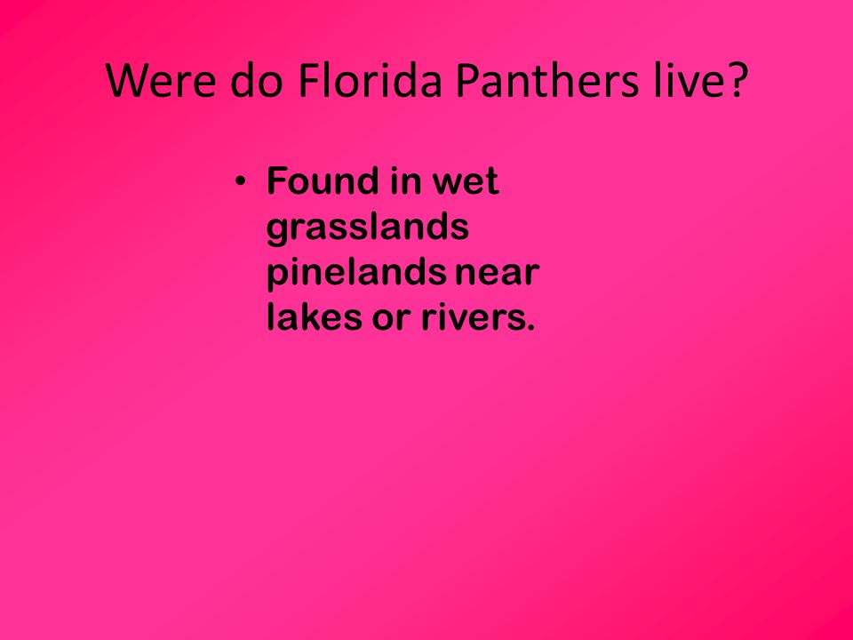Were do Florida Panthers live? Found in wet grasslands pinelands near lakes or rivers.