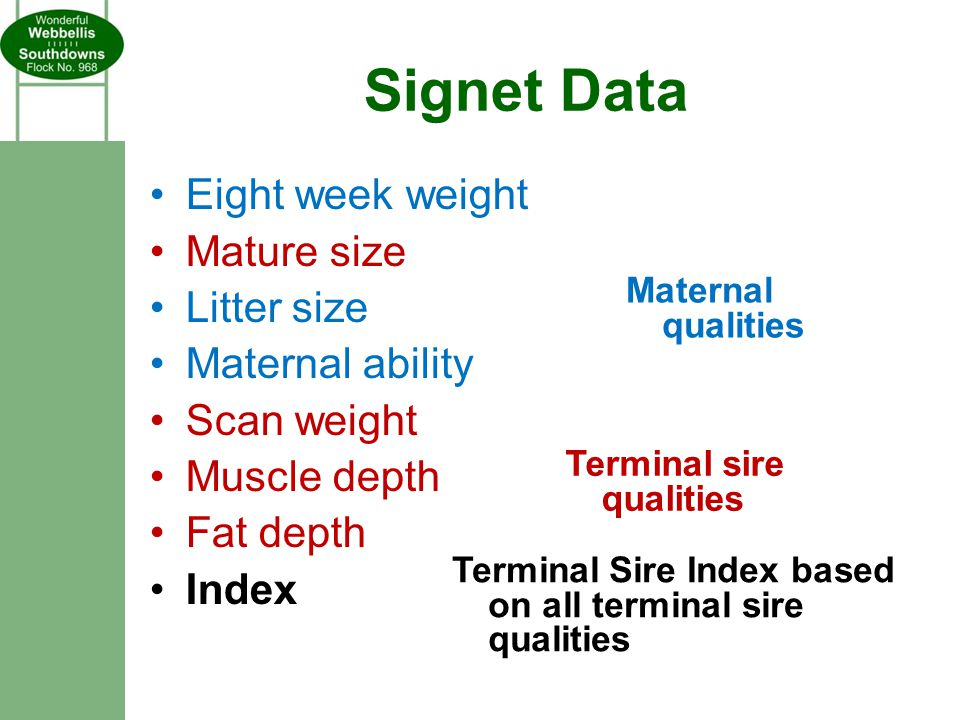 Signet Data Eight week weight Mature size Litter size Maternal ability Scan weight Muscle depth Fat depth Index Maternal qualities Terminal sire qualities Terminal Sire Index based on all terminal sire qualities