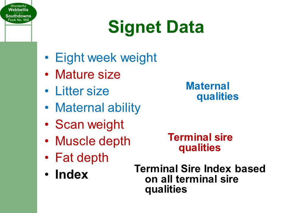Signet Data Eight week weight Mature size Litter size Maternal ability Scan weight Muscle depth Fat depth Index Maternal qualities Terminal sire quali