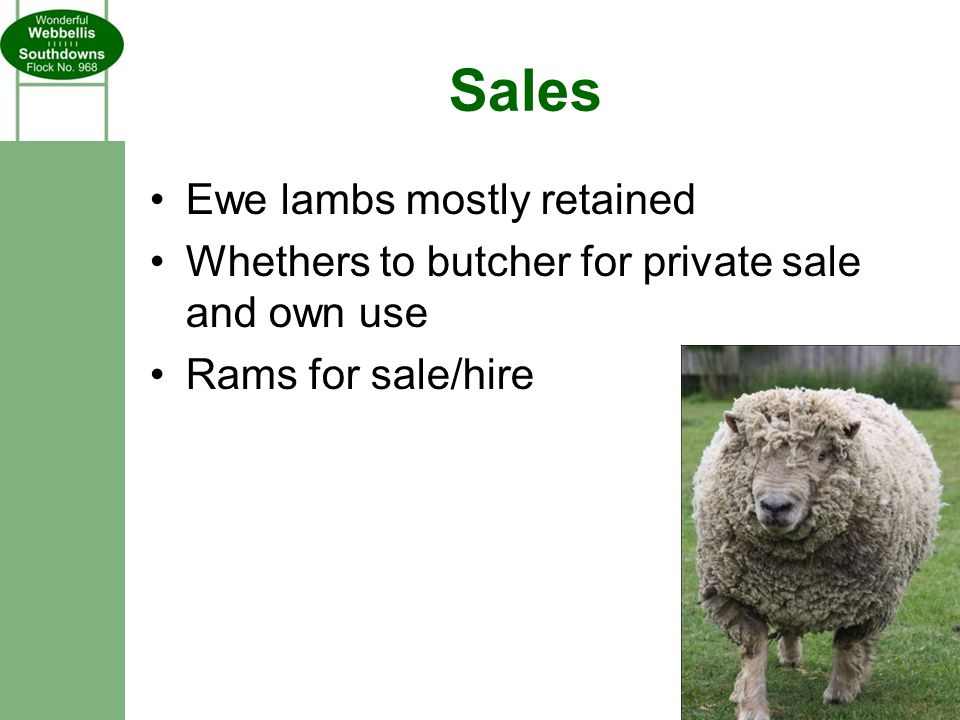 Sales Ewe lambs mostly retained Whethers to butcher for private sale and own use Rams for sale/hire