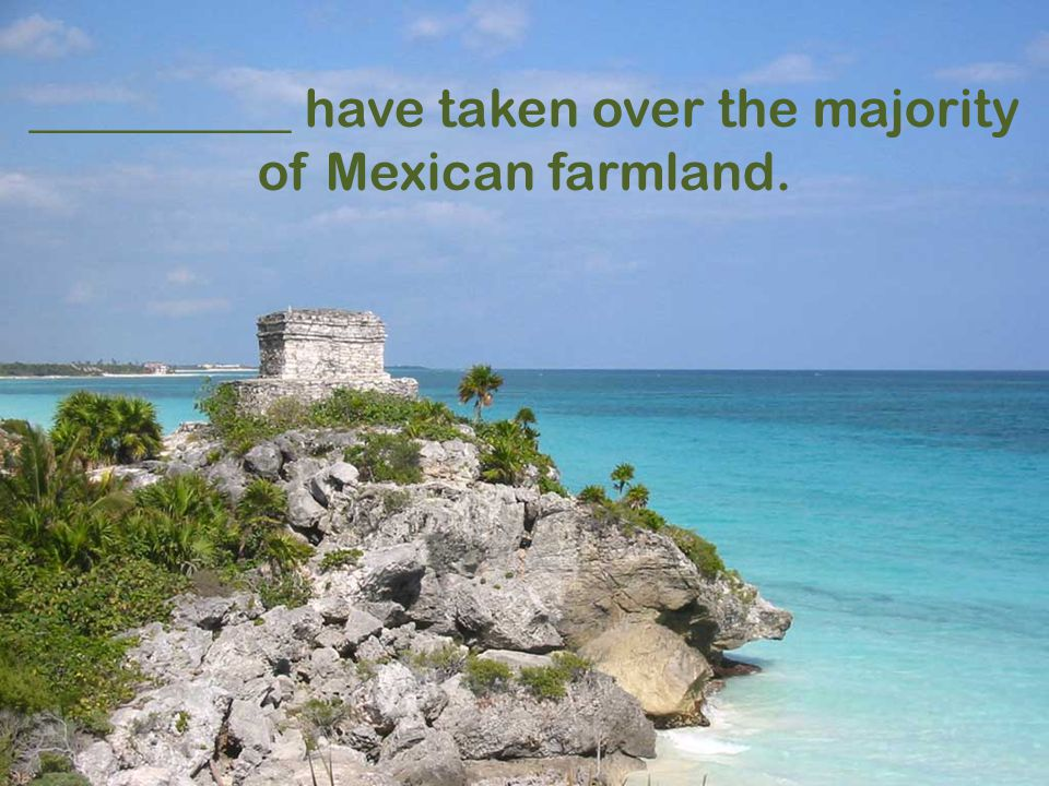 __________ have taken over the majority of Mexican farmland.