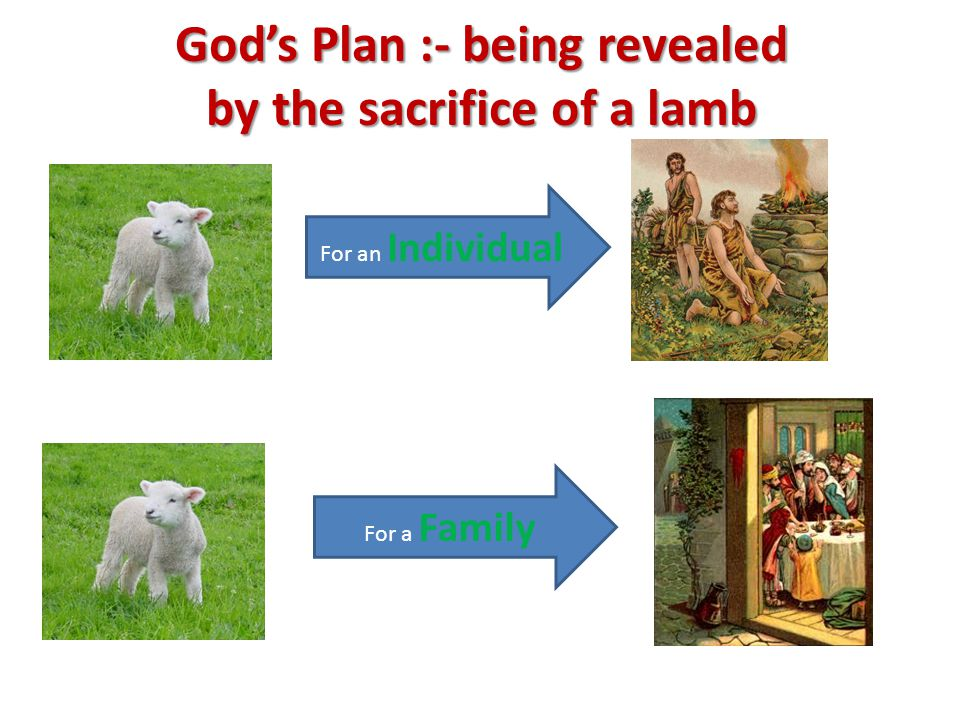 God's Plan :- being revealed by the sacrifice of a lamb For an Individual For a Family
