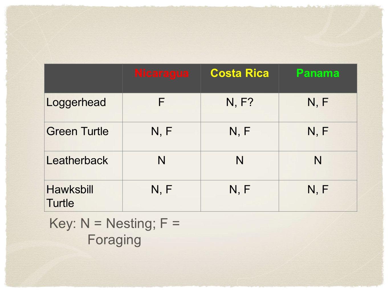 Key: N = Nesting; F = Foraging NicaraguaCosta RicaPanama LoggerheadFN, F N, F Green TurtleN, F LeatherbackNNN Hawksbill Turtle N, F
