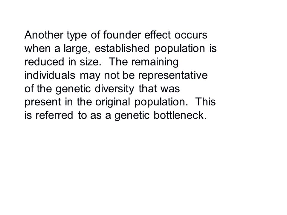 Another type of founder effect occurs when a large, established population is reduced in size. The remaining individuals may not be representative of
