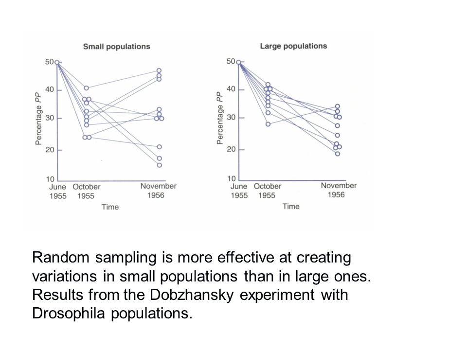 Random sampling is more effective at creating variations in small populations than in large ones. Results from the Dobzhansky experiment with Drosophi