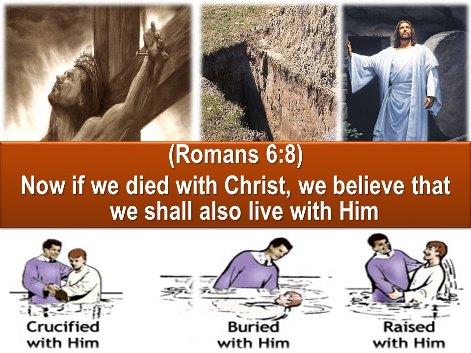 (Romans 6:8) Now if we died with Christ, we believe that we shall also live with Him (Romans 6:8) Now if we died with Christ, we believe that we shall
