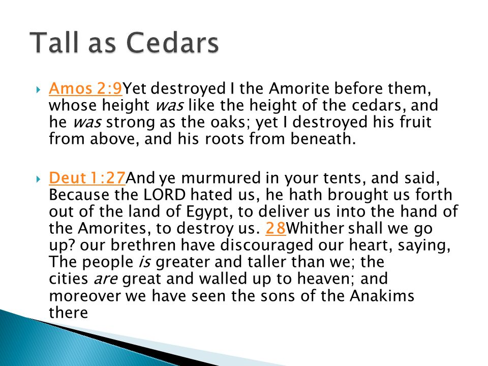  Amos 2:9Yet destroyed I the Amorite before them, whose height was like the height of the cedars, and he was strong as the oaks; yet I destroyed his fruit from above, and his roots from beneath.