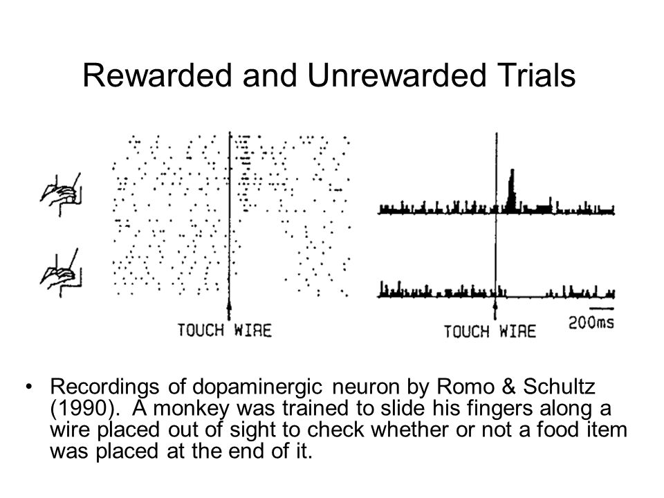 Rewarded and Unrewarded Trials Recordings of dopaminergic neuron by Romo & Schultz (1990).