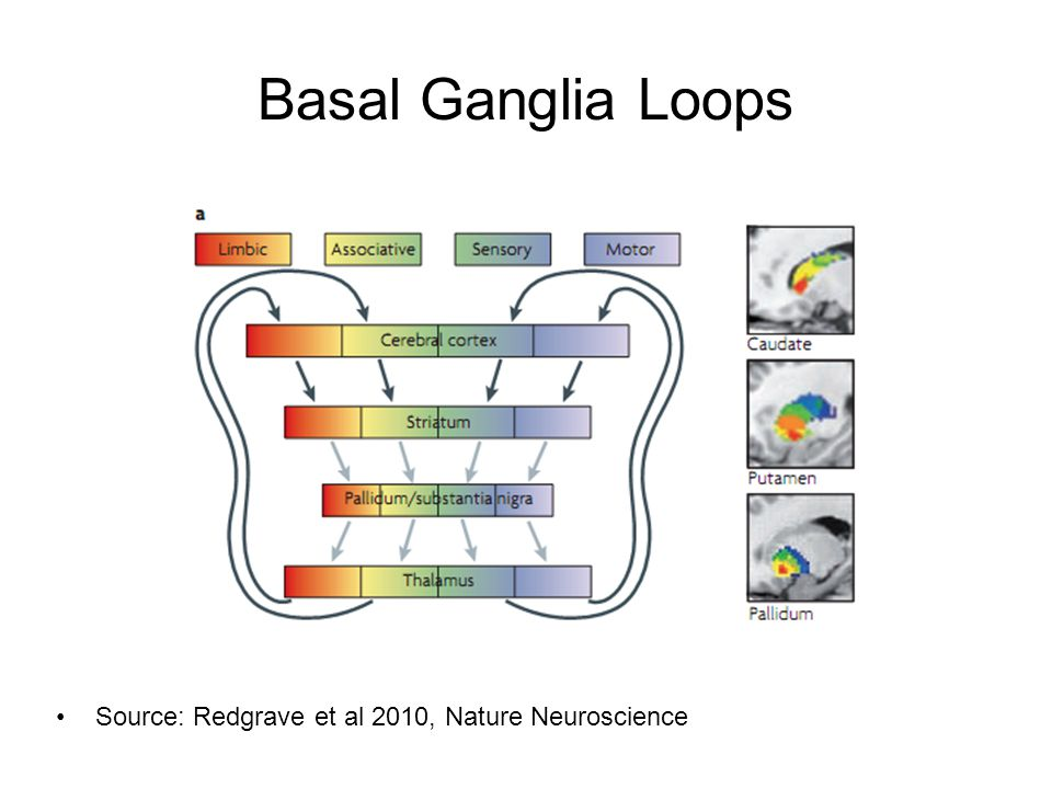 Basal Ganglia Loops Source: Redgrave et al 2010, Nature Neuroscience