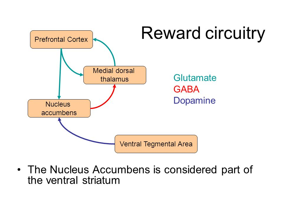 Reward prediction Recordings of dopaminergic neuron by Romo & Schultz (1990) in a monkey trained that, when a little door on a hatch opens, it can reach in to collect a food item.