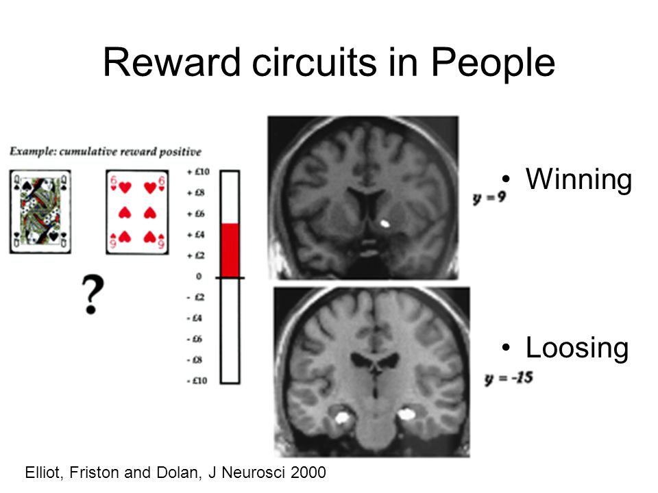 Reward circuits in People Winning Loosing Elliot, Friston and Dolan, J Neurosci 2000