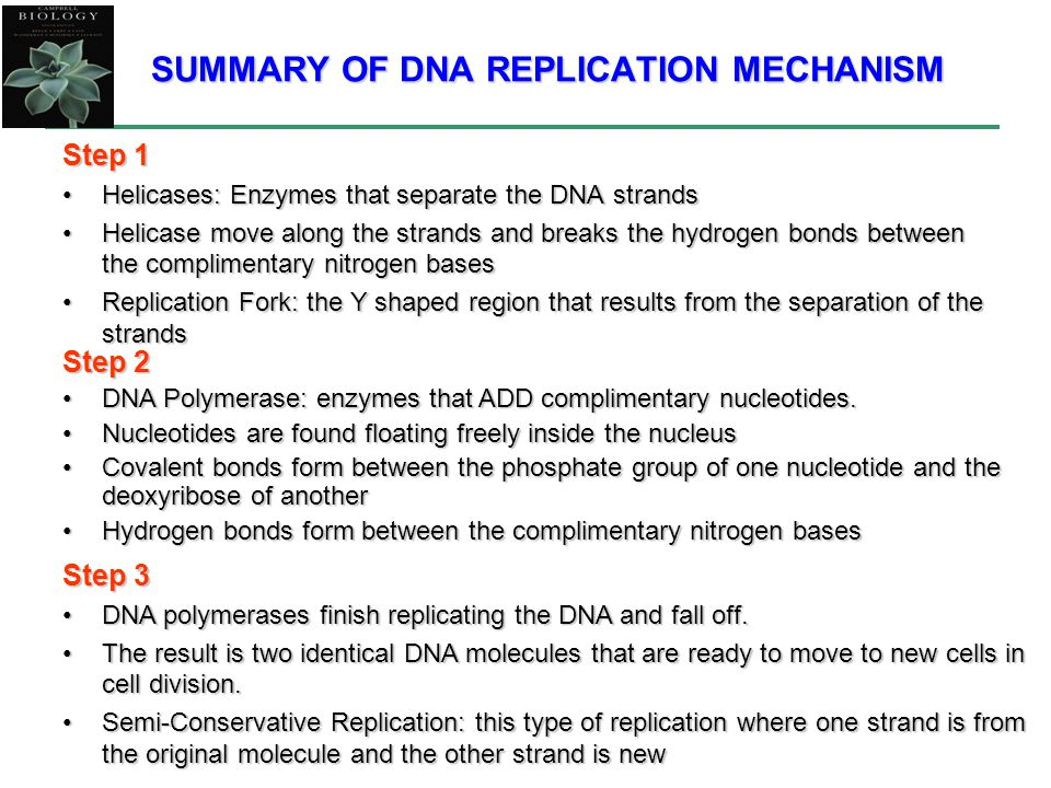 SUMMARY OF DNA REPLICATION MECHANISM Step 1 Helicases: Enzymes that separate the DNA strandsHelicases: Enzymes that separate the DNA strands Helicase move along the strands and breaks the hydrogen bonds between the complimentary nitrogen basesHelicase move along the strands and breaks the hydrogen bonds between the complimentary nitrogen bases Replication Fork: the Y shaped region that results from the separation of the strandsReplication Fork: the Y shaped region that results from the separation of the strands Step 2 DNA Polymerase: enzymes that ADD complimentary nucleotides.DNA Polymerase: enzymes that ADD complimentary nucleotides.