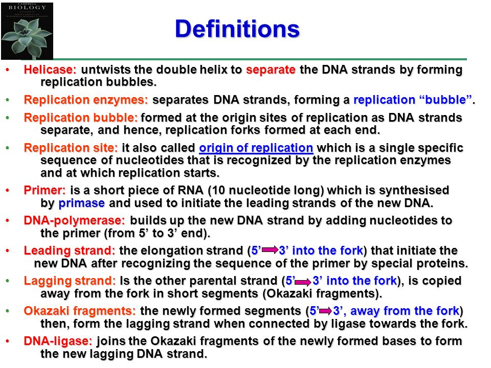 Helicase: untwists the double helix to separate the DNA strands by forming replication bubbles.Helicase: untwists the double helix to separate the DNA