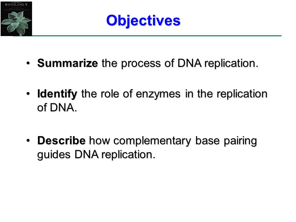 Objectives Summarize the process of DNA replication.Summarize the process of DNA replication.