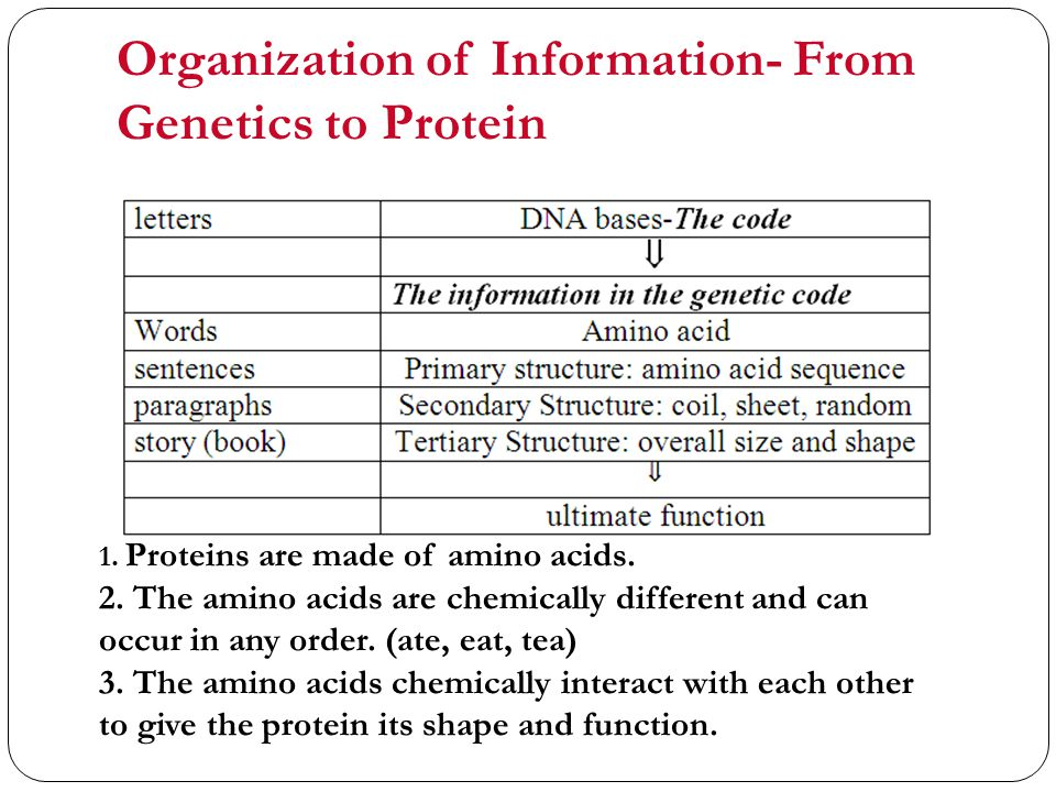 Organization of Information- From Genetics to Protein 1.