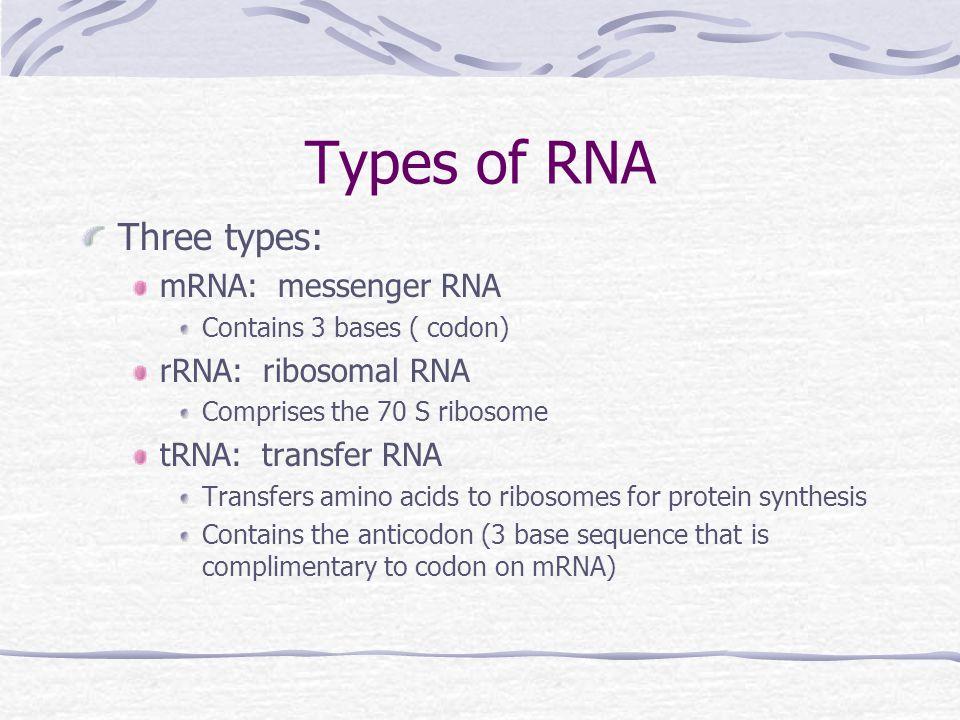 Types of RNA Three types: mRNA: messenger RNA Contains 3 bases ( codon) rRNA: ribosomal RNA Comprises the 70 S ribosome tRNA: transfer RNA Transfers a